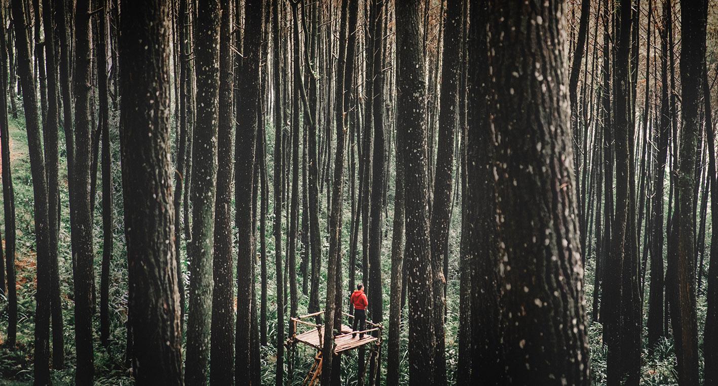 Kletterausrüstung Baum Fällen : Baumfällung münchen spezialisiert auf schwierige lagen